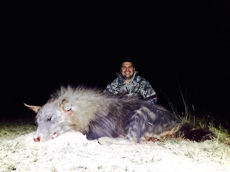 Brown Hyena Hunting