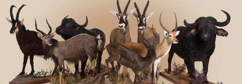 TransAfrican Taxidermists
