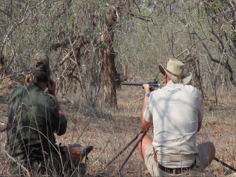 buffalo-aiming
