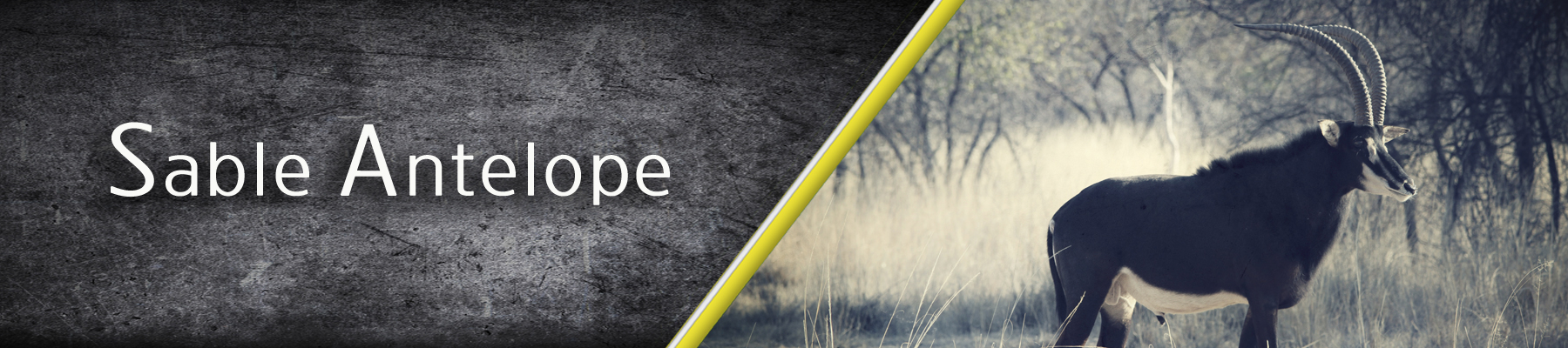 Sable-Antelop